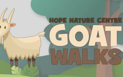 Goat Walks return for February Half Term!